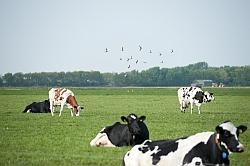 'Nog veel zuivelproducten van stalmelk'