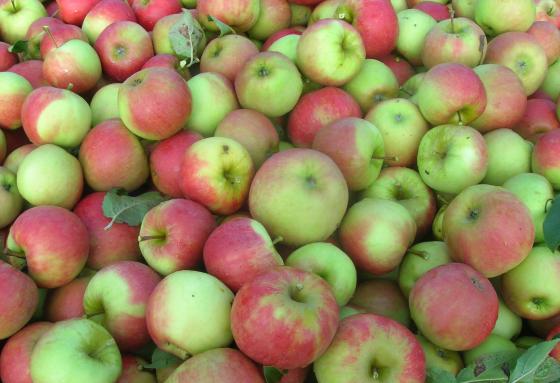 'Gen-voedsel kan via omweg toch op markt'