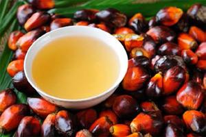 Unilever kiest voor duurzame palmolie