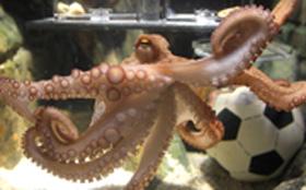 Dirk en GfK hebben een octopus nodig