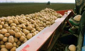 Aardappels worden duur betaald