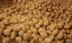 Aardappelen 40 procent duurder