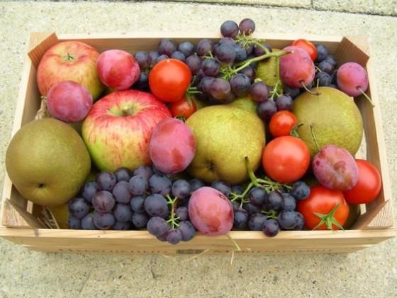 Fruit: € 85 miljoen schade door vorst