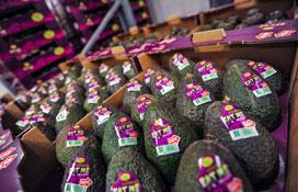 Avocado importeur Nature's Pride focust op inkoopstrategie