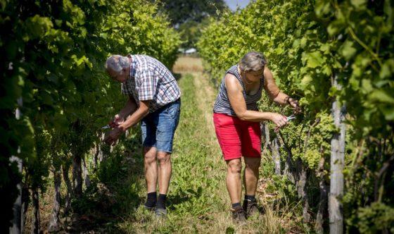 CBS: Wijnboer levert vaakst direct aan klant