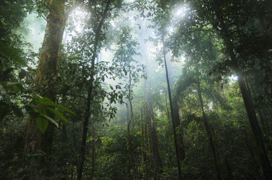 'Foodgiganten vernietigen regenwoud'