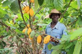 Mars investeert miljard in verduurzaming cacaoketen