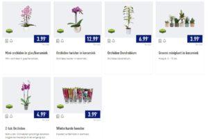 Aldi komt met Kwekers Trots-planten