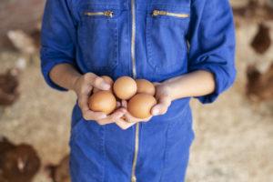 Albert Heijn legt eierketen bloot