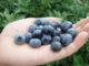 NL kwekers verbaasd over import zachtfruit