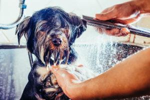 Diensten stuwen omzet van Pets Place
